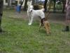 Mnohí psíčkari so svojimi štvornohými miláčikmi s obľubou využívali výbeh pre psov MČ Košice – Staré Mesto v Mestskom parku (oproti pošte). Tento výbeh bol zrušený. Nie však na trvalo.