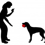 Na Tyršovom nábreží už stojí nový výbeh pre psy Výbeh bol realizovaný na základe usmernenia mesta Košice zo dňa 11.08.2016 o možnosti čerpať účelové prostriedky z rozpočtu mesta. Pre Staré Mesto bola určená suma 9 103,00 €. V októbri 2016 prebehla anketa medzi obyvateľmi najbližšie položeného bytového domu Tyršovo nábrežie č. 6, v ktorej sa […]